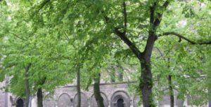 maigrüner Domplatz
